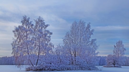 Winter Snow Trees Wallpapers