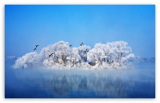 Beautiful Winter Birds Wallpaper