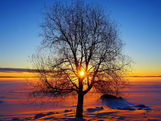Winter Sunset Tree